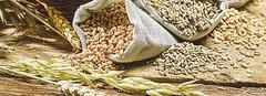 Oves 4,40 Kč, pšenice...